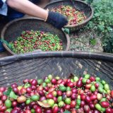 Dalat: An amazing trip to search into the amazing coffee farm