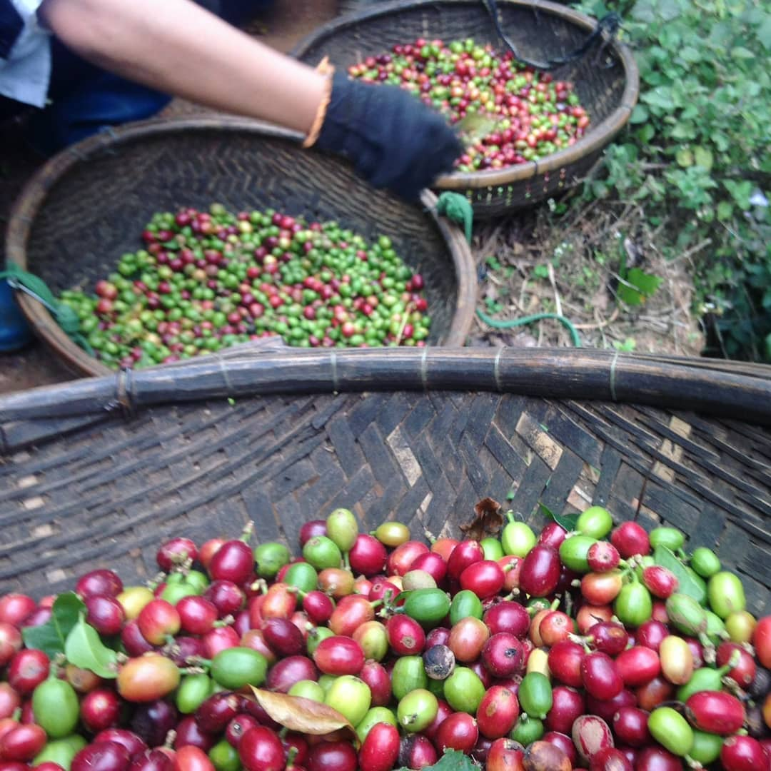 The best dalat coffee farm experience