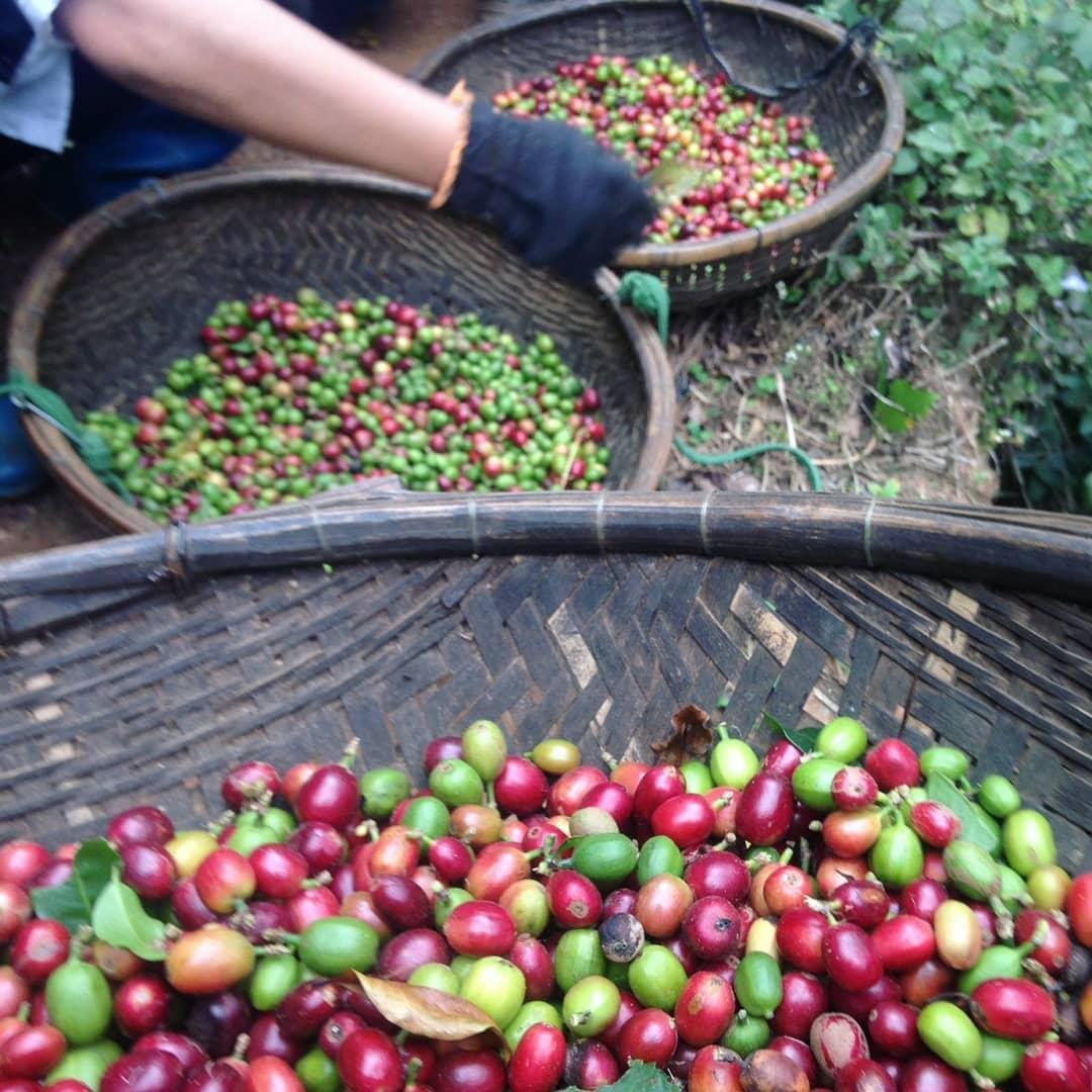 The best dalat coffee farm experience
